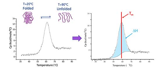 Figura 3: Determinação da entalpia de desnaturação de uma proteína.<br/>FONTE: Malvern Panalytical, (2020).