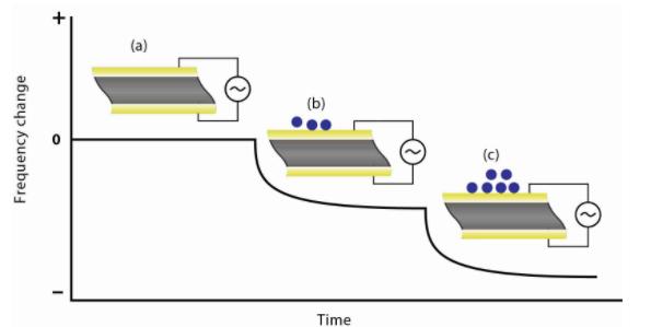 Figura 3: (a) o cristal de quartzo oscila a uma frequência constante quando a voltagem apropriada é aplicada, (b) a frequência de oscilação começa a diminuir conforme as moléculas começam a se depositar na superfície do cristal, e (c) a frequência diminui ainda mais à medida que mais moléculas se depositam.<br/>FONTE: Biolin Scientific / Q-Sense, 2020.