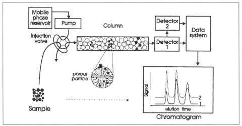 Figura 1: Princípio de cromatografia de exclusão por tamanho (SEC)<br/>FONTE: Pasch et al., (1999).